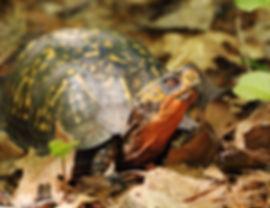 turtle Sedimentation Basin
