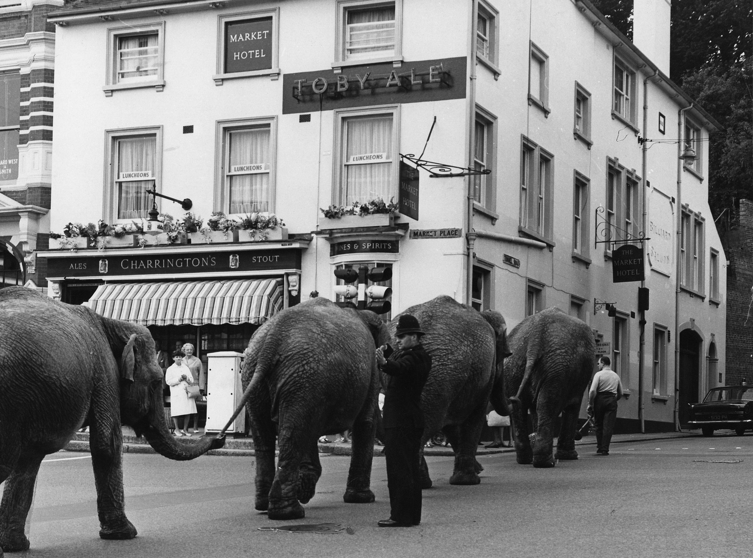 reigate elephants