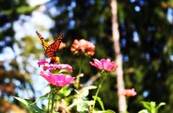 a butterfly at Bernheim Forest