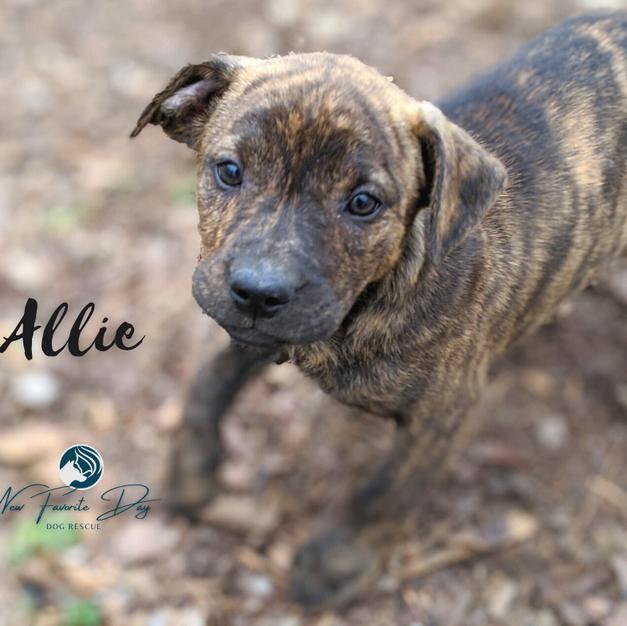 Allie | Female