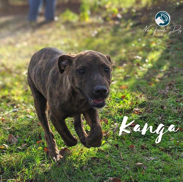 Kanga | Female