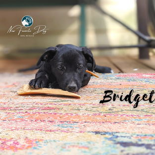 Bridget | Female