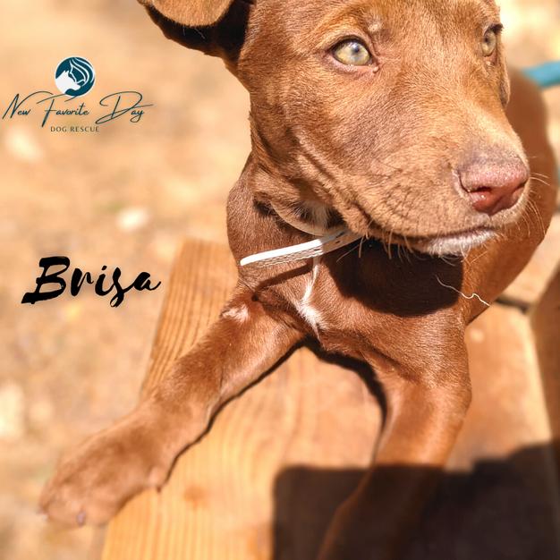 Brisa | Female