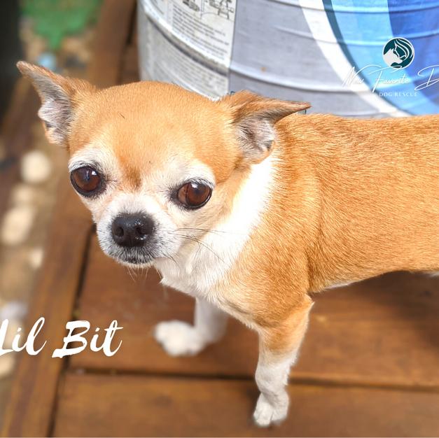 Lil Bit | Female