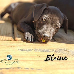 Blaine   Male