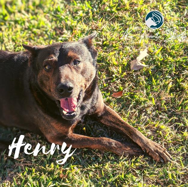 Henry | Male