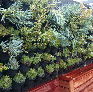 Vertical Gardens by Greenwest