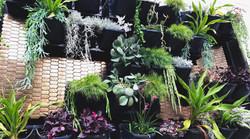 Alexander Hermes Vertical Garden