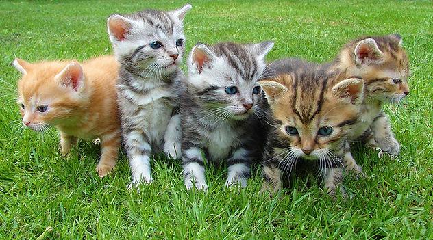 petit chattons, dogma