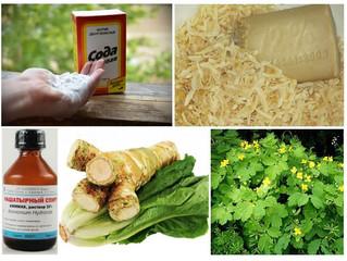 С миру по нитке... Народные советы дачников о способах лечения растений.