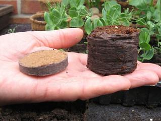Кокосовые или торфяные? В какие таблетки лучше сажать рассаду?