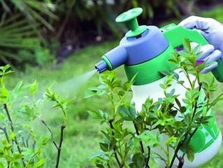 Календарный план работ по защите сада от вредителей и болезней.