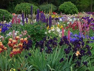 """""""Дурманом сладким веяло,когда цвели сады...""""Душистые многолетники сада."""