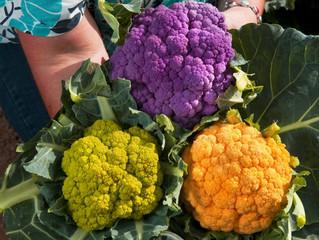 Популярные сорта цветной капусты.