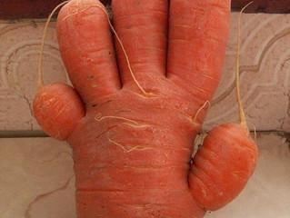 Почему морковь вырастает бесформенной?