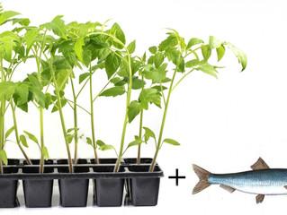 Применение рыбы в садоводстве.