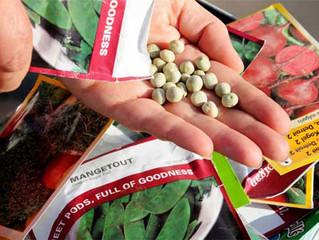 Сколько семян в пакете?