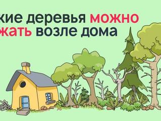 Деревья возле дома. Верите ли вы в приметы и суеверия?