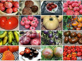 Эксклюзивные сорта томатов по форме и цвету.