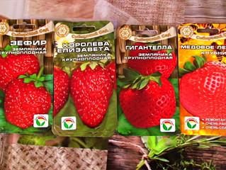 Лучшие сорта садовой земляники в семенах на 2019 год.