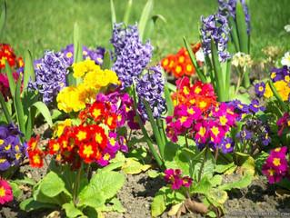 Дачные и садовые работы в апреле.  Полезные  советы и рекомендации.
