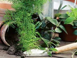 Пора вспомнить про домашние растения.