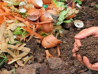Пищевые отходы - в сады и огороды!