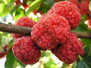 Необычные ягодные деревья.    Кудрания - клубничное дерево.