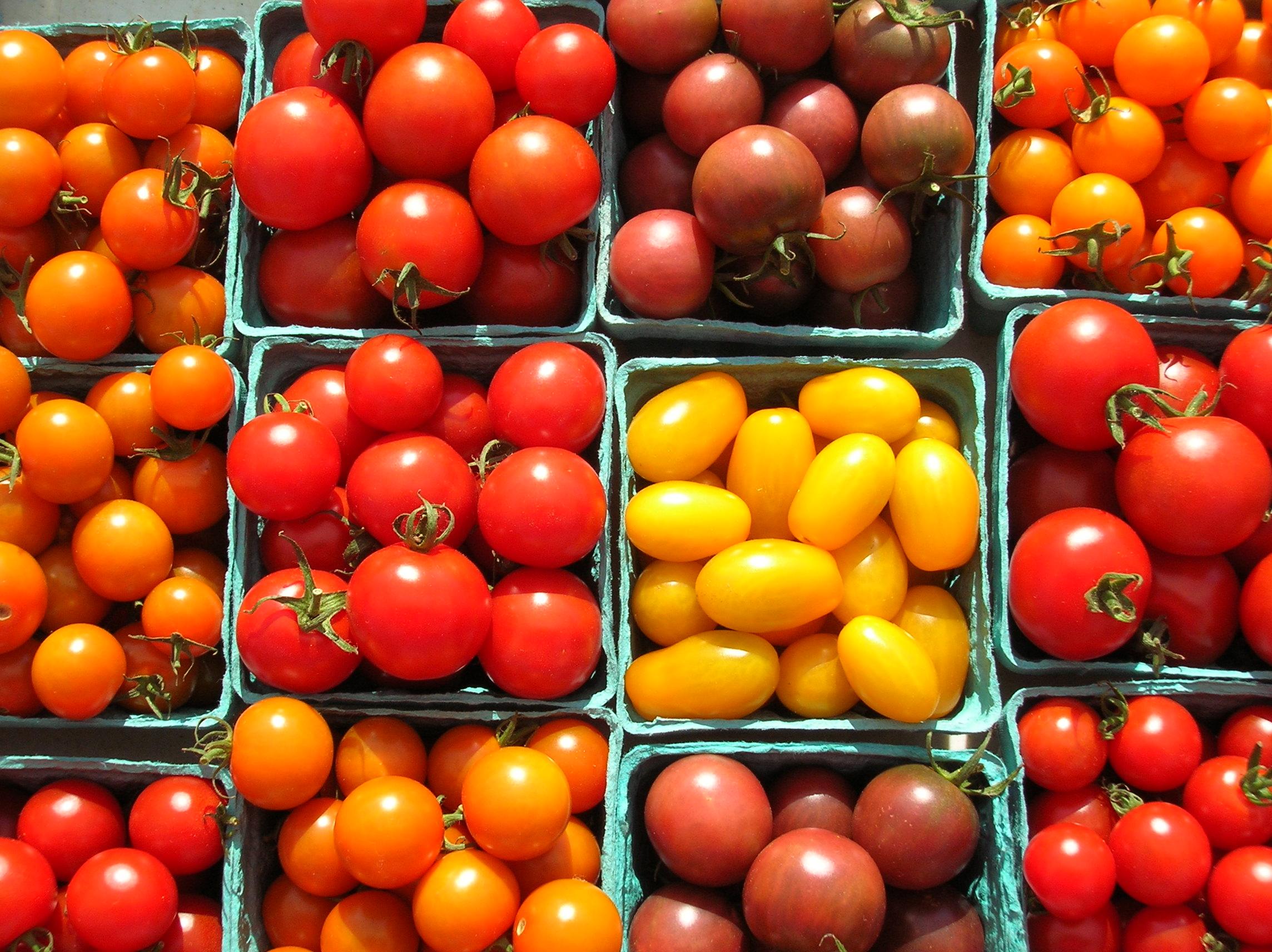 чад мускулатура, томаты черри лучшие сорта фото даче может быть