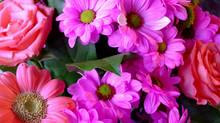 А хорошо ли вы знакомы с цветами?Проверим?
