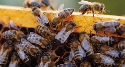 Il miele di Carlo Amodeo Presìdio Slow Food