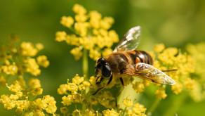 Difendiamo la Biodiversità