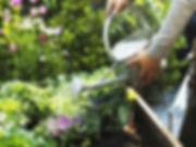 Garden watering.jpg