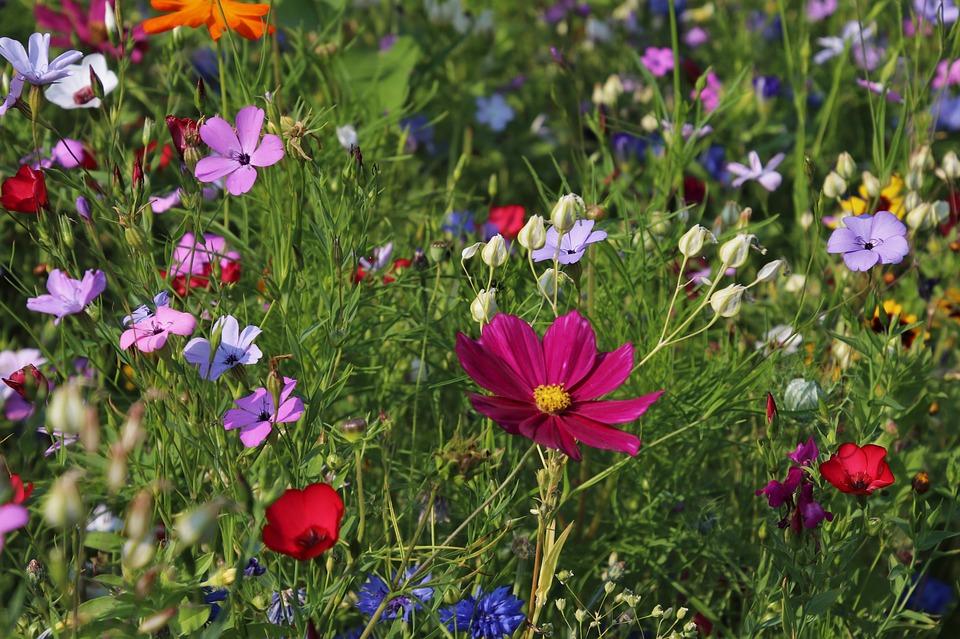 Fleurs diverses & variées