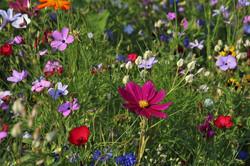 flowers-3571119_960_720
