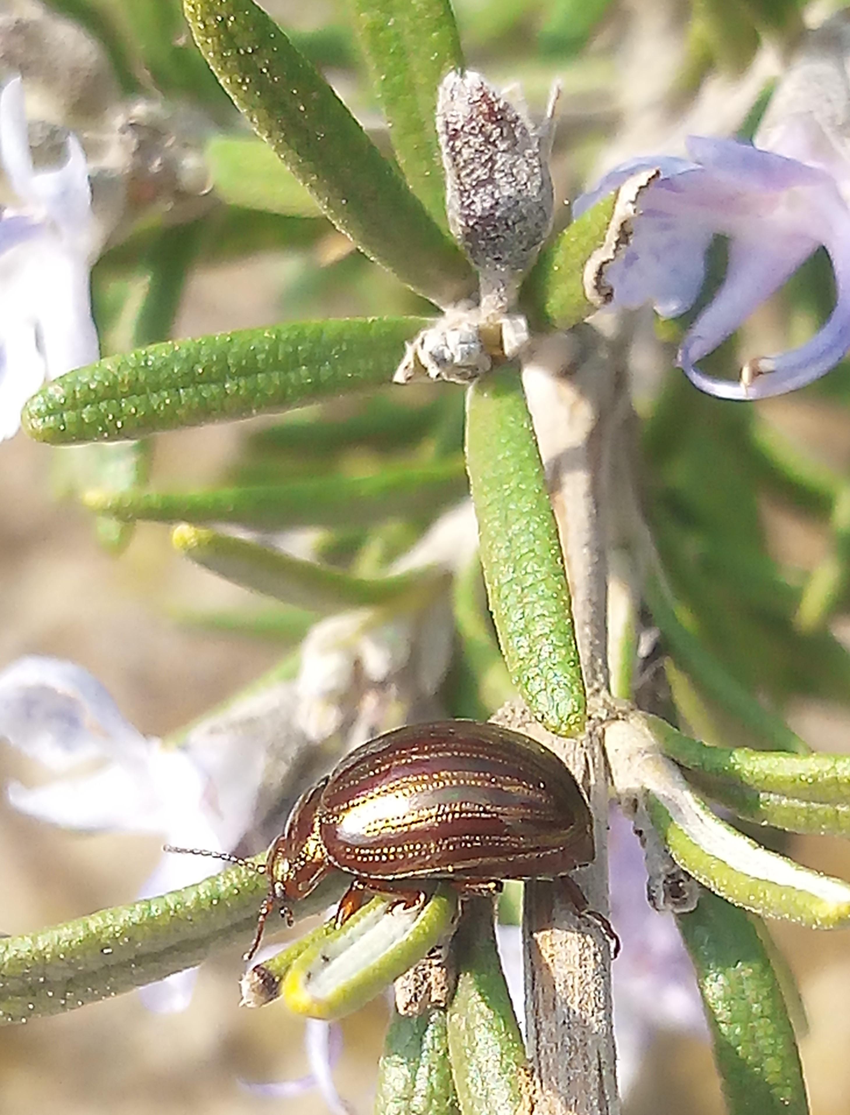 Joli scarabée doré
