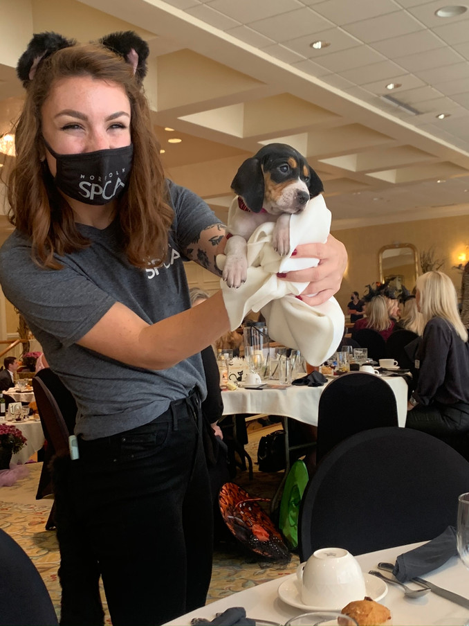 Mode5 Gets Spooky at the Annual Norfolk SPCA Witches and Whiskers Event