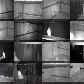 CCTV Private Bird collector