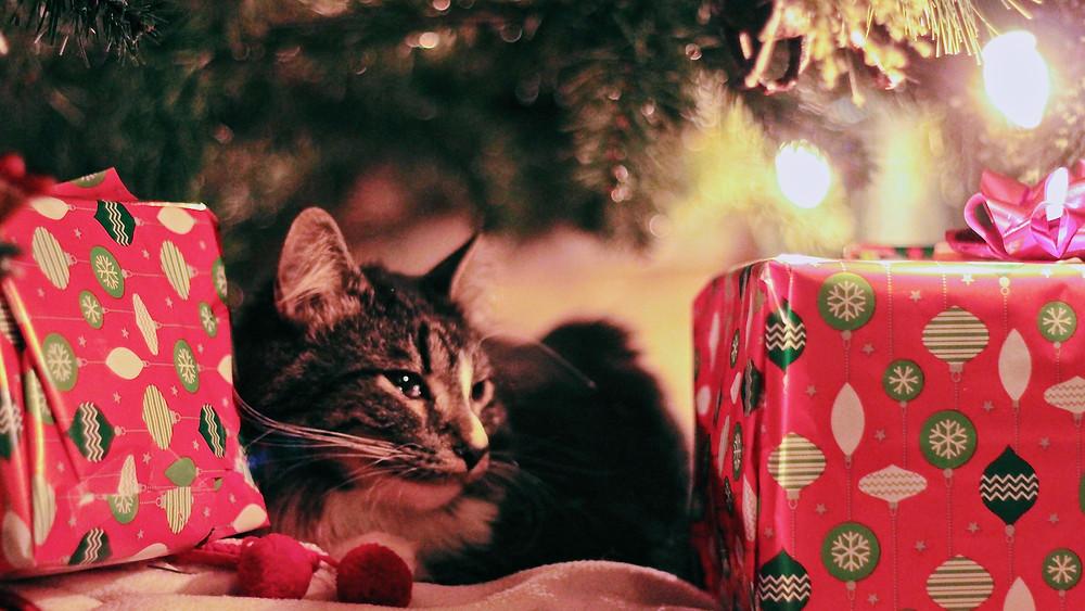 Idées cadeaux de noël pour chat