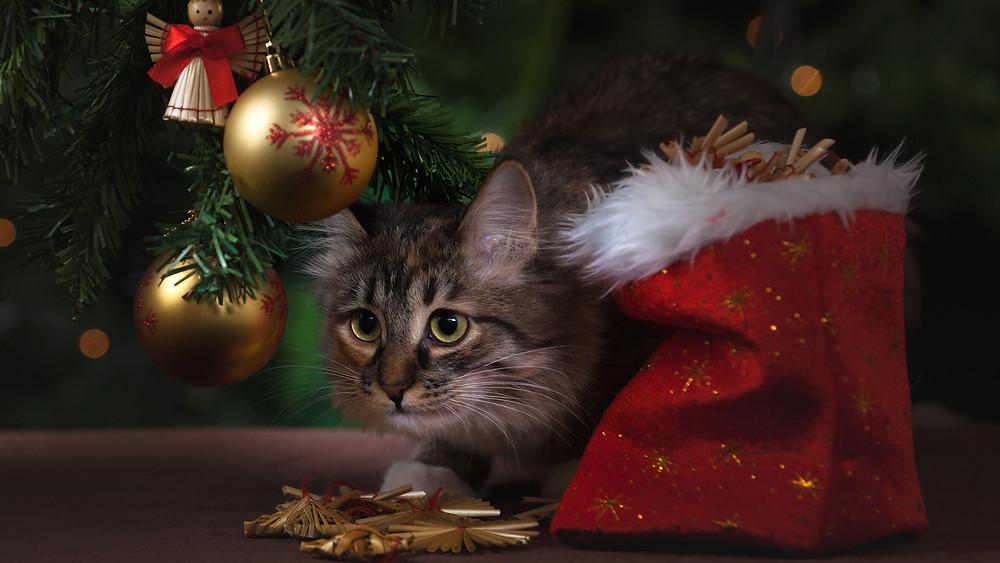 chat cadeau de noel