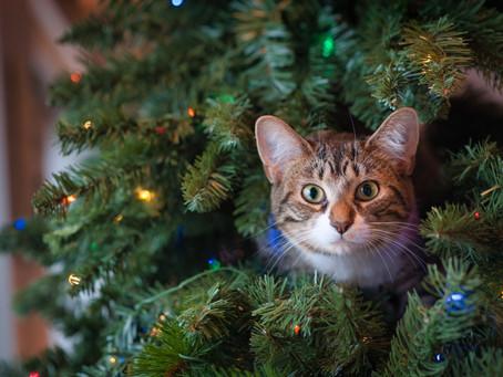 5 Idées de Cadeaux De Noël 2020 Pour Votre Chat
