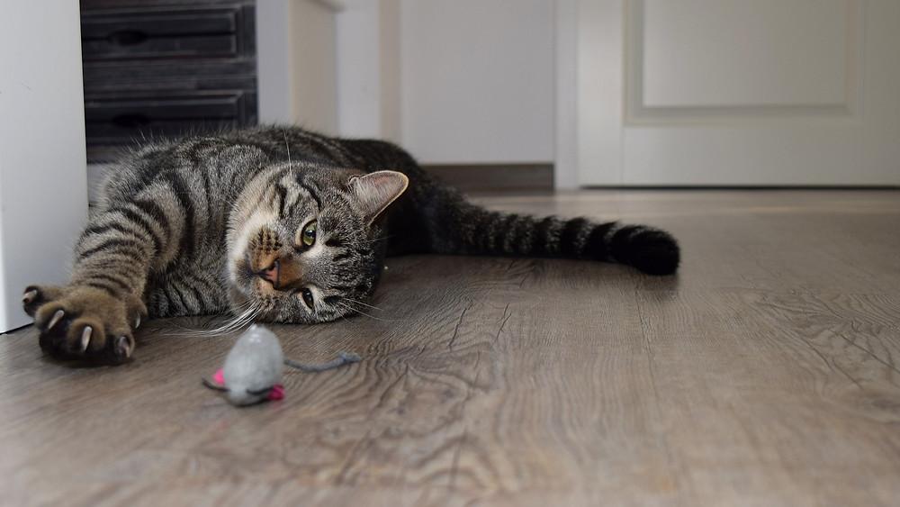 idée jouet de chat