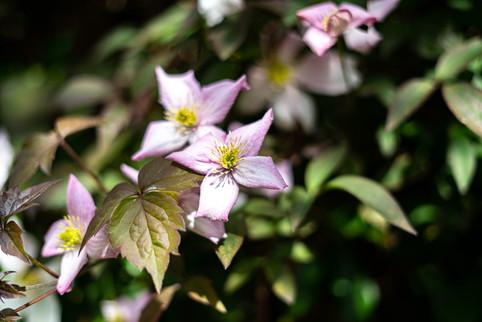 Rosemary-5.jpg