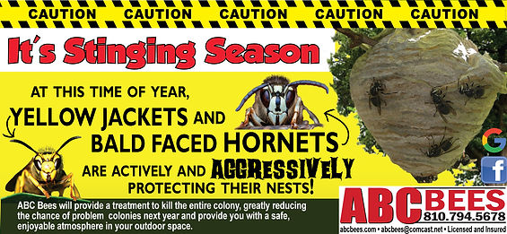 Yellow-jackets---bald-faced---Stinging-S