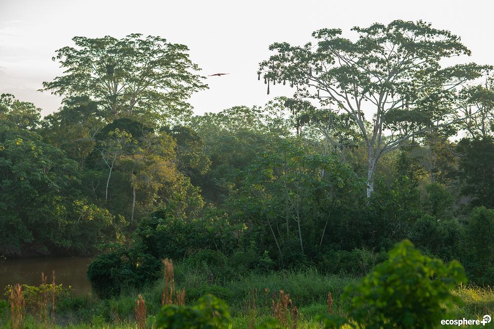 trees of the Amazon rainforest