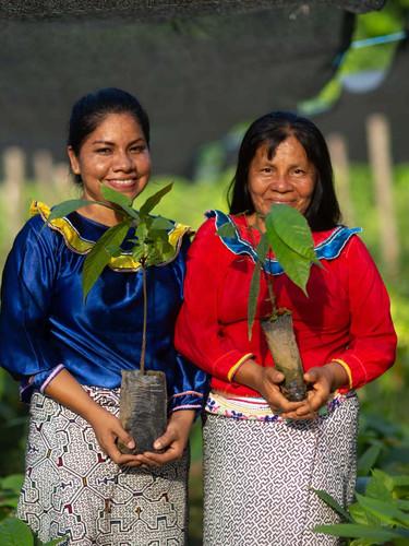 Kew's Ten Rules for Reforestation