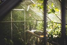 greenhouse-691704.jpg