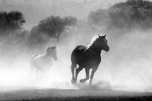 horse-430441.jpg
