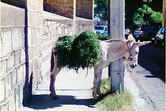 mule_church_photo.jpg
