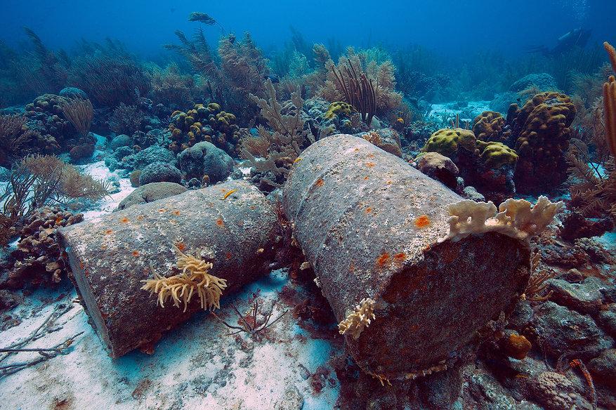 Coral Bleaching_Pollution.jpg